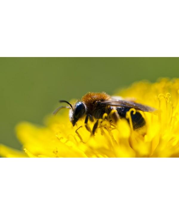 Plan Bee !