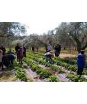 Open Farm Days 2021