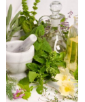 Workshop about Medicinal Plants / Herbs : Plant Pharmacy