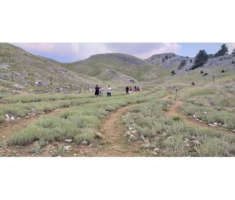 Μαθαίνοντας από τη med culture: Ανοικτά αγροκτήματα, σχολικοί κήποι, θησαυροί στο χώμα και προϊόντα από το αγρόκτημα στο σπίτι μας..